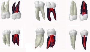 anatomic dental project